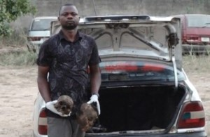 Commercial Driver Caught With Two Human Heads